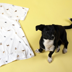 T-shirt Stockholm Kennel Pattern